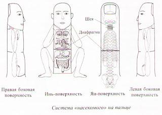 По системе насекомого тазобедренный сустав анатомия челюстей и височно нижнечелюстного сустава